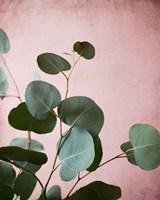 Sage Eucalyptus No. 2 Fine Art Print