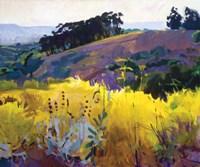 Late Sun, Eucalyptus on the Ridge Fine Art Print
