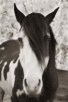 Pale Eyed Stallion Fine Art Print
