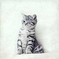 Cat Winks Fine Art Print