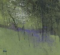 Bluebells Fine Art Print