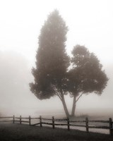 Cedar Tree and Fence Fine Art Print