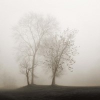 Four Trees in Fog Fine Art Print