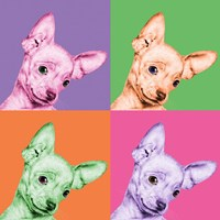 Sweet Chihuahua Pop Fine Art Print