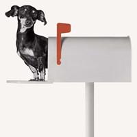 You've Got Mail Fine Art Print