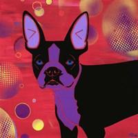 Bubbly Boston Fine Art Print