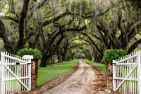 Plantation Road Fine Art Print