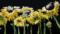 Sunflower Field on Black Fine Art Print