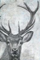 Portrait of a Deer Fine Art Print