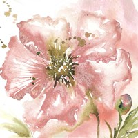 Blush Watercolor Poppy II Fine Art Print