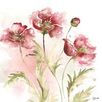 Blush Watercolor Poppy III Fine Art Print