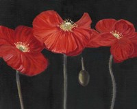 Poppy Trio I Fine Art Print