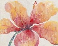 Blooming Hibiscus Fine Art Print