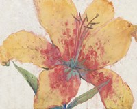 Blooming Lily Fine Art Print