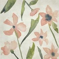 Blush Pink Blooms IV Framed Print