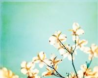Blossoms Adrift Fine Art Print