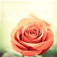 My Perfect Rose Fine Art Print