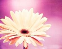 Peachy Keen (magenta) Fine Art Print