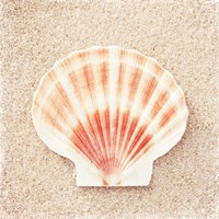 Scallop Shell Fine Art Print