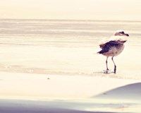 Bird at The Beach Fine Art Print