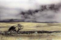 Limantour Marsh Fine Art Print