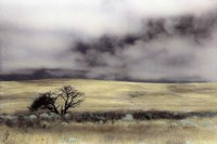 Limantour Marsh Fine Art Print