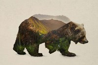 North American Brown Bear Fine Art Print