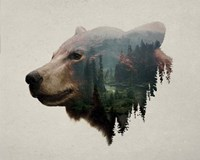 Pacific Northwest Black Bear Fine Art Print