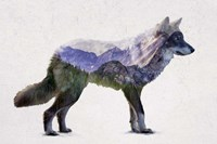 Rocky Mountain Grey Wolf Fine Art Print