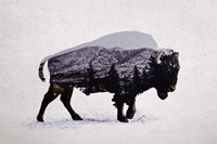 The American Bison Fine Art Print
