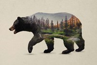 The North American Black Bear Fine Art Print
