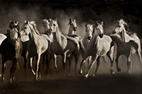 Dream Horses Fine Art Print