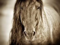 Mustang Sally Fine Art Print