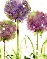 Alliums Fine Art Print