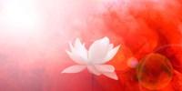 Lotus in Flames Fine Art Print