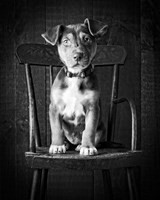 Mutt Black & White Fine Art Print