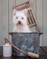 Washing the Dog Fine Art Print