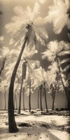 Palm Shadows I Fine Art Print