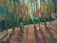 Backlit Woods Fine Art Print