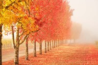Fall Trees in the Mist Fine Art Print