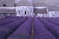 Lavender Abbey Fine Art Print
