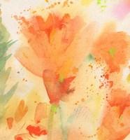 Windblown Poppies #2 Fine Art Print