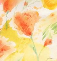 Windblown Poppies #3 Fine Art Print