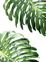 Double Philodendron (color) Fine Art Print