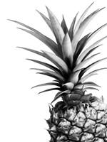 Pineapple (BW) Fine Art Print