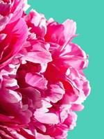 Pink Peony Fine Art Print