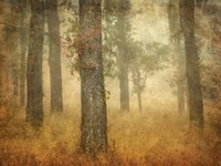 Oak Grove in Fog Fine Art Print