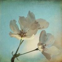 Spring Sings Fine Art Print