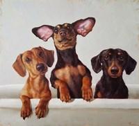 3 Amigos Fine Art Print
