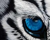 Tiger Eye Fine Art Print